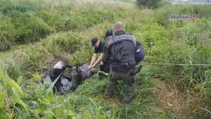 Uratowali źrebaka uwięzionego w bagnistym rowie