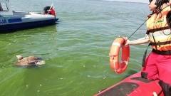 Służby uratowały tonącego bielika