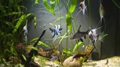 Jak dobrać grzałkę do akwarium? I inne ważne pytania