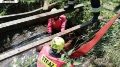 Strażacy uratowali cielaka, który wpadł do szamba