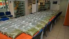 Próbował wwieźć do Polski 42 kg marihuany