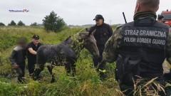 Uratowali źrebaka uwięzionego w bagnistym rowie [wideo]
