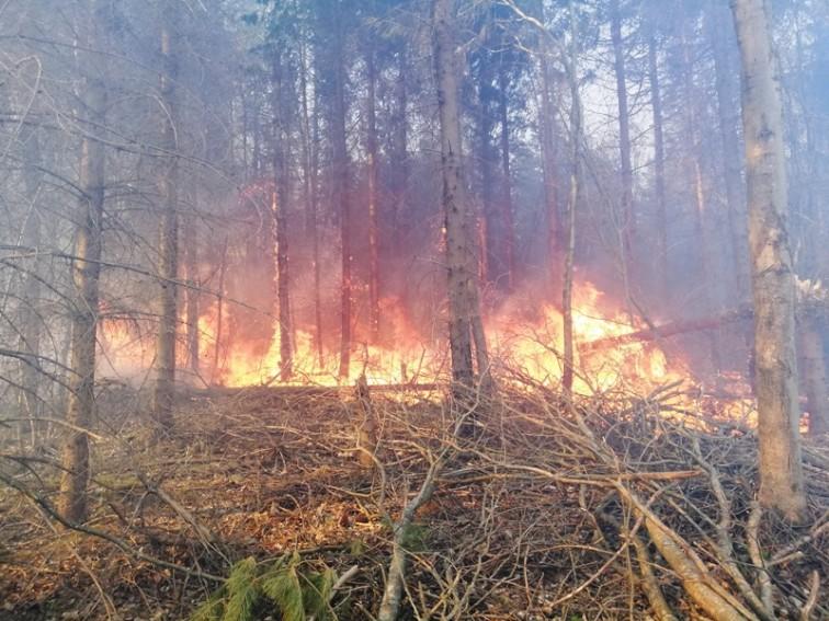 Strażacy prawie cztery godziny gasili pożar lasu
