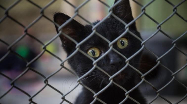 Trzymiesięczne kociaki poszukują domów